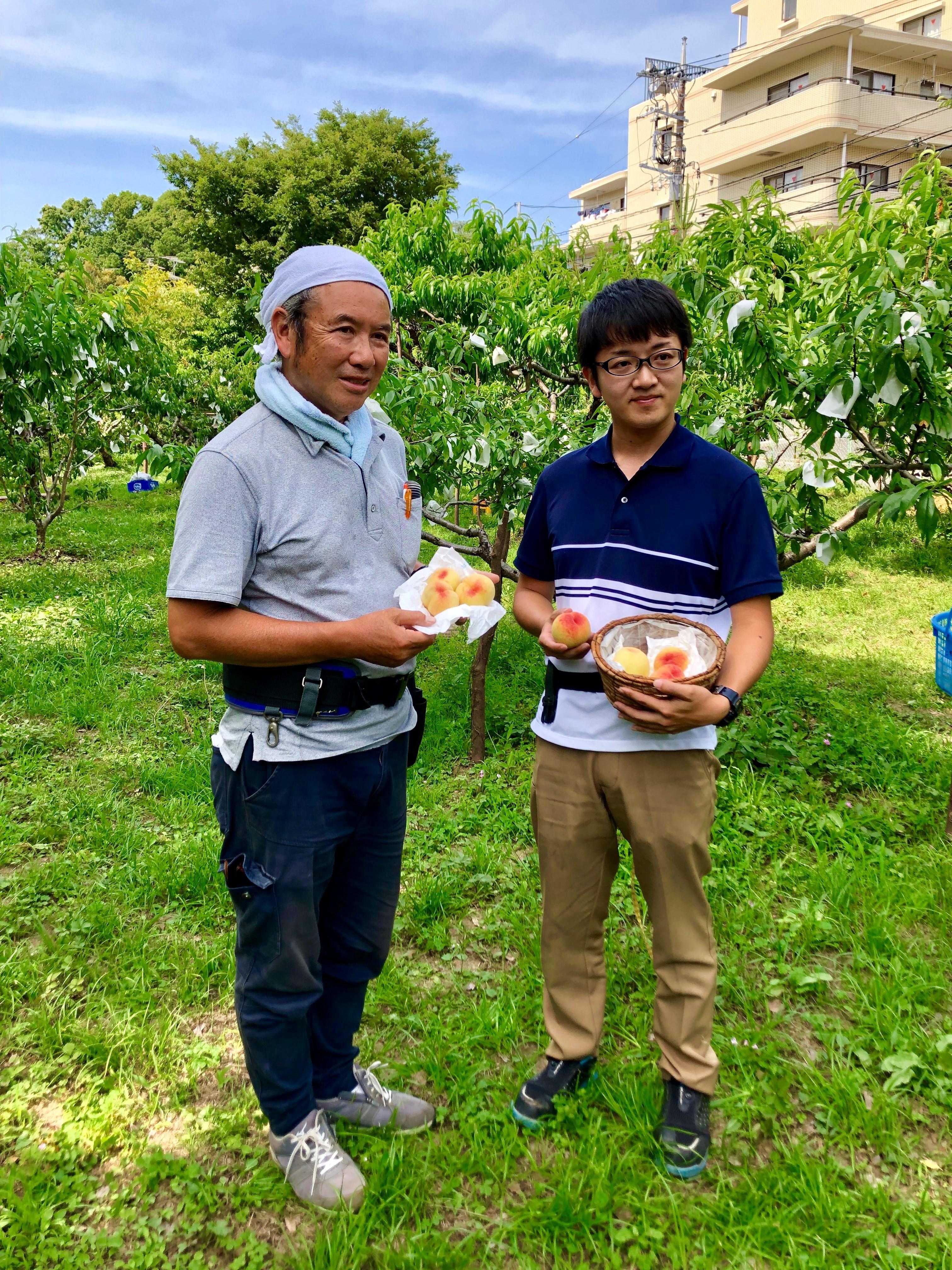 綱島 幻の桃 2020今年度も収穫無事完了!